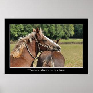 Funny sleeping foal poster