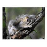 Funny Sleepy Squirrel Blank Card Postcards