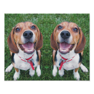Funny Smiling Beagle Pups Poster