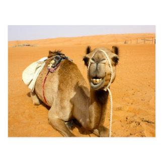 Funny Smiling Camel Postcard