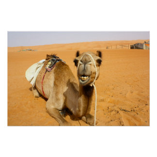 Funny Smiling Camel Poster