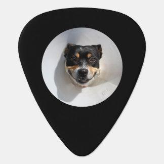 Funny smiling dog plectrum