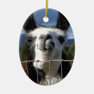 Funny Smiling Llama in Southern Oregon Ceramic Oval Decoration