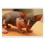 Funny sphynx kitten card