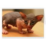 Funny sphynx kitten greeting card