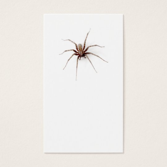 Funny spider office prank plain white professional business