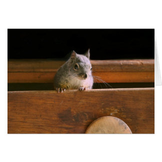 Funny Squirrel Hiding Greeting Card