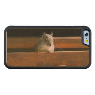 Funny Squirrel Hiding Carved® Maple iPhone 6 Bumper Case
