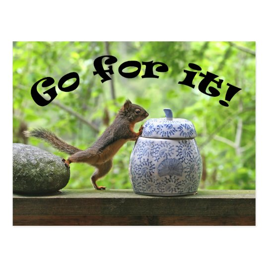 Funny Squirrel Picture ~ Go For It! Postcard