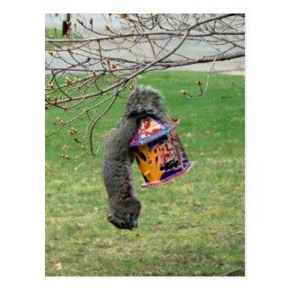 Funny Squirrel Postcards