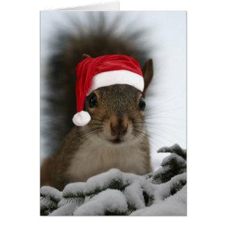 Funny Squirrel Wearing Santa Hat Card