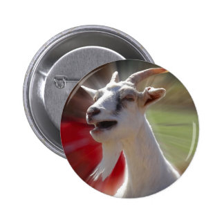 Funny Tallking Goat Photograph 6 Cm Round Badge