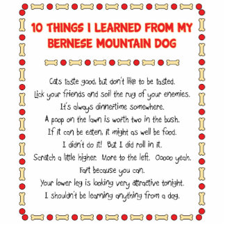 Funny Things I Learned From Bernese Mountain Dog Standing Photo Sculpture