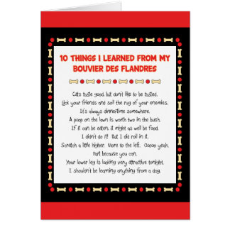 Funny Things I Learned From Bouvier des Flandres Card