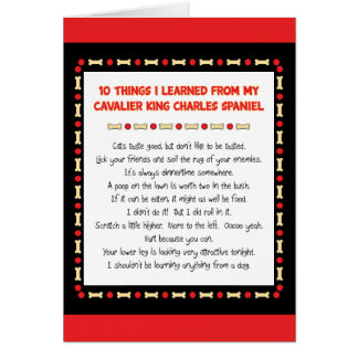 Funny Things I Learned From Cavalier King Charles Greeting Card