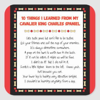 Funny Things I Learned From Cavalier King Charles Square Sticker