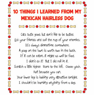 Funny Things I Learned From Mexican Hairless Dog Standing Photo Sculpture