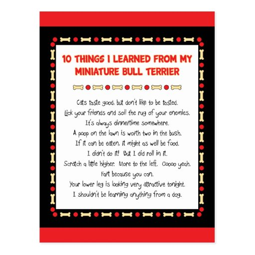 Funny Things I Learned From Miniature Bull Terrier Post Cards