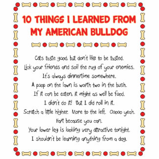 Funny Things I Learned From My American Bulldog Standing Photo Sculpture
