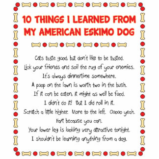 Funny Things I Learned From My American Eskimo Dog Photo Cut Out