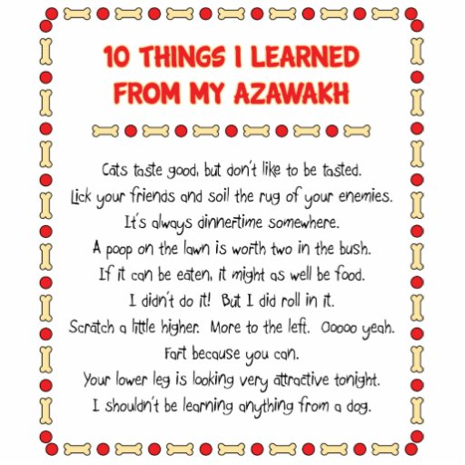 Funny Things I Learned From My Azawakh Acrylic Cut Out