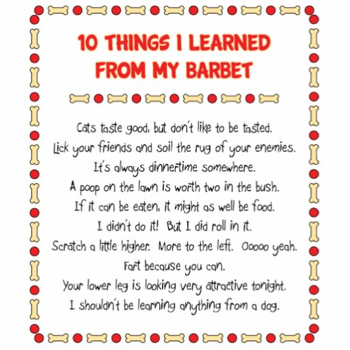 Funny Things I Learned From My Barbet Photo Cut Outs