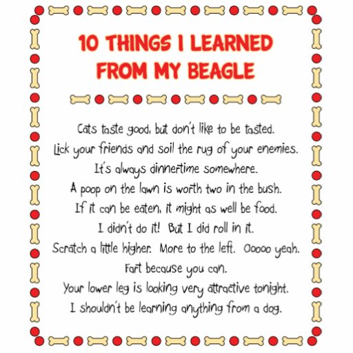 Funny Things I Learned From My Beagle Photo Cutouts