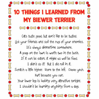 Funny Things I Learned From My Biewer Terrier Photo Cut Out