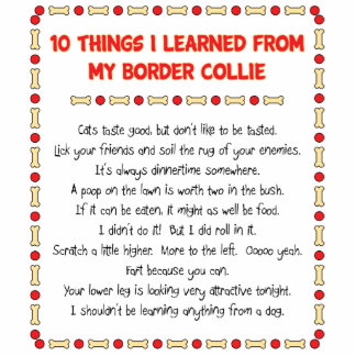 Funny Things I Learned From My Border Collie Standing Photo Sculpture