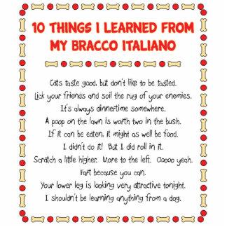Funny Things I Learned From My Bracco Italiano Photo Cutouts