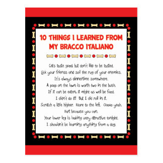 Funny Things I Learned From My Bracco Italiano Postcard
