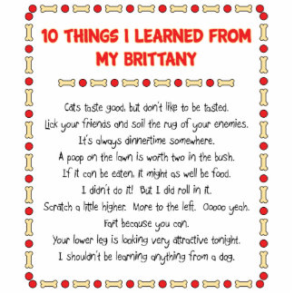 Funny Things I Learned From My Brittany Photo Sculpture