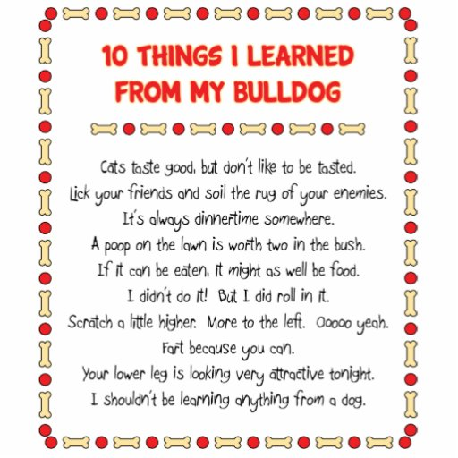 Funny Things I Learned From My Bulldog Photo Sculptures