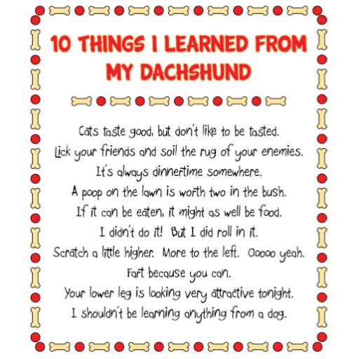 Funny Things I Learned From My Dachshund Acrylic Cut Outs