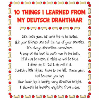 Funny Things I Learned From My Deutsch Drahthaar Standing Photo Sculpture