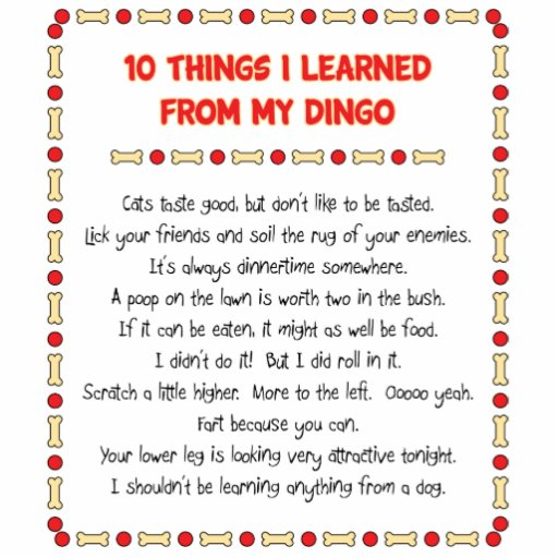 Funny Things I Learned From My Dingo Photo Cutouts