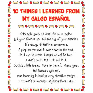 Funny Things I Learned From My Galgo Español Photo Cutout