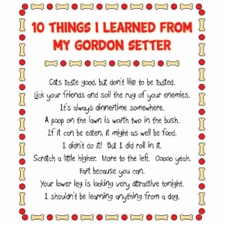 Funny Things I Learned From My Gordon Setter Acrylic Cut Outs