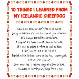 Funny Things I Learned From My Icelandic Sheepdog Photo Cutout