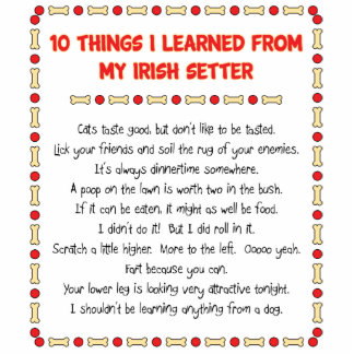 Funny Things I Learned From My Irish Setter Cut Out