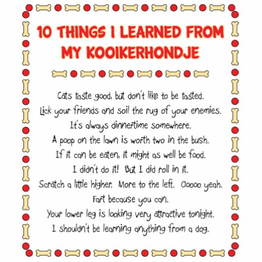 Funny Things I Learned From My Kooikerhondje Photo Cut Out