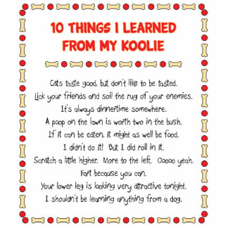 Funny Things I Learned From My Koolie Cut Out