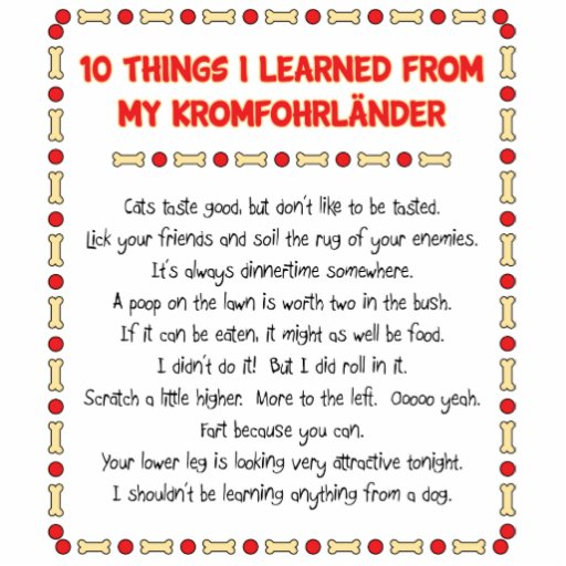 Funny Things I Learned From My Kromfohrländer Photo Cut Outs