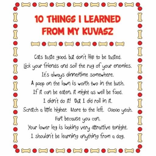 Funny Things I Learned From My Kuvasz Photo Cutouts