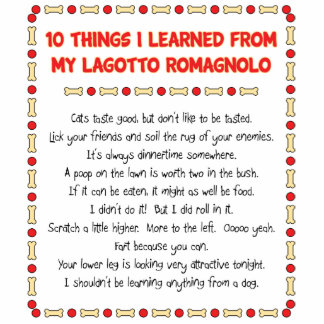 Funny Things I Learned From My Lagotto Romagnolo Acrylic Cut Outs