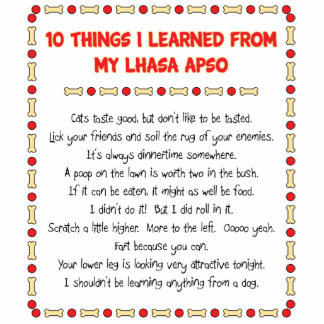 Funny Things I Learned From My Lhasa Apso Photo Cutouts