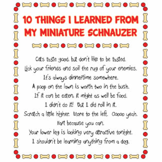 Funny Things I Learned From My Miniature Schnauzer Standing Photo Sculpture
