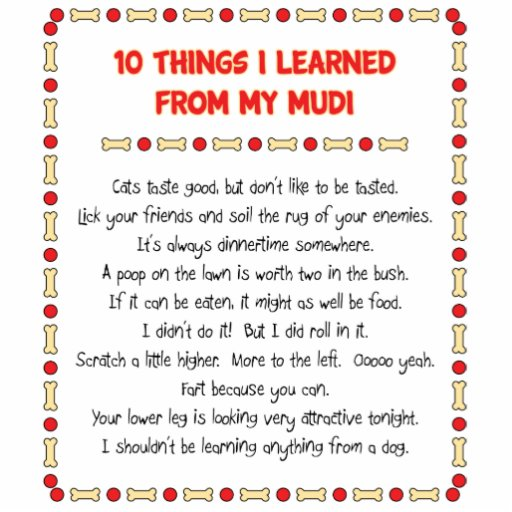 Funny Things I Learned From My Mudi Photo Cut Outs