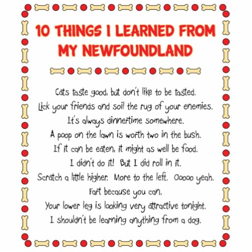 Funny Things I Learned From My Newfoundland Photo Sculpture