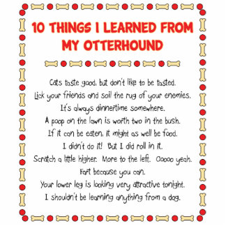 Funny Things I Learned From My Otterhound Cut Out